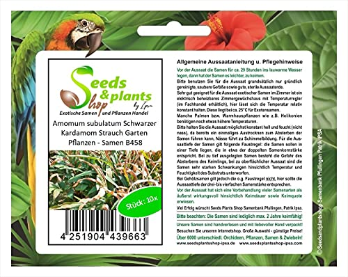 Stk - 10x Amomum subulatum Schwarzer Kardamom Strauch Garten Pflanzen - Samen B458 - Seeds Plants Shop Samenbank Pfullingen Patrik Ipsa