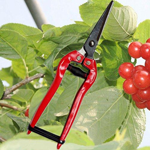 1 PC Tête droite en acier carbone jardinage Ciseaux Cisailles Coupe branche Franche