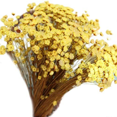 VORCOOL 100 unids Lovely Mini Daisy Flores secas Decorativas Flor de Estrella pequeña Ramo de Flores Florales Naturales para fotografía Decoración de la Boda (Amarillo)