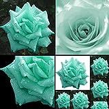 Potato001 100Pcs Mint Green Rose Seeds Butterflies Love Garden Flower Rare Plant Seeds
