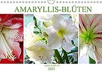 Amaryllis-Blueten (Wandkalender 2022 DIN A4 quer): Majestaetische Blumen mit beeindruckenden Staubgefaessen (Monatskalender, 14 Seiten )