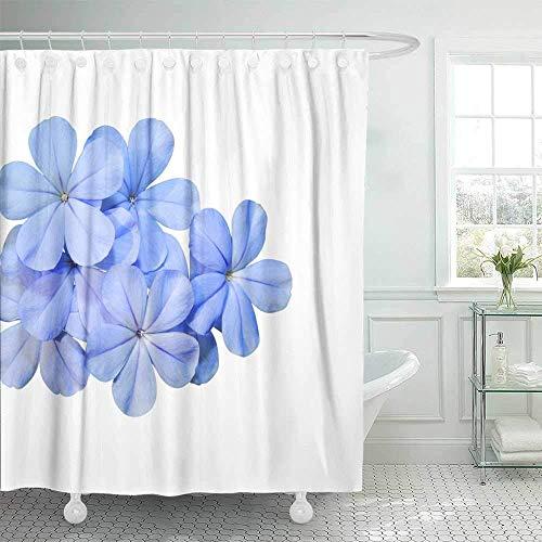 wobuzhidaoshamingzi Duschvorhang Duschvorhang, Duschvorhang weiß blau Blume isoliert im Hintergrund Bleikraut Plumbago Auriculata mit Badezimmer 72 x 72 Zoll