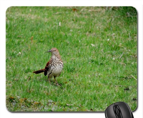 Brown Thrasher Mouse Pad, Mousepad (Birds Mouse Pad)