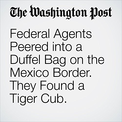 Federal Agents Peered into a Duffel Bag on the Mexico Border. They Found a Tiger Cub. copertina