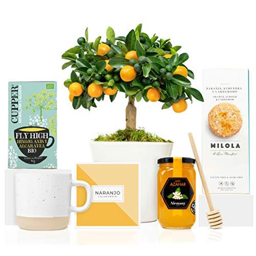 Lote Gourmet Regalo Flora con Naranjo Enano Calamondin 38 cm, guía de cuidados, taza de cerámica, infusión ecológica, miel de azahar, cuchara para miel y galletas en caja de regalo