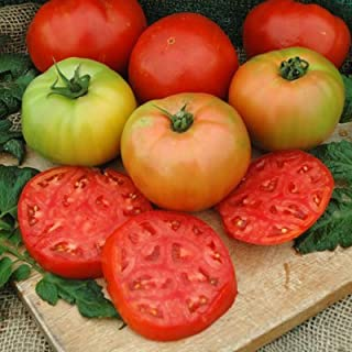Tomato Red Deuce - Untreated Seeds - 500 Seeds