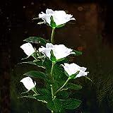 Luces de energía solar para jardín al aire libre, luces LED solares con 5 rosas de flores, luces decorativas para jardín, césped, patio, camino, decoración impermeable (blanco)