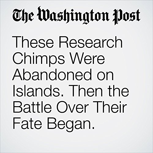 These Research Chimps Were Abandoned on Islands. Then the Battle Over Their Fate Began. copertina