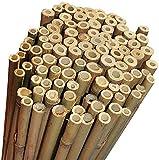 Canne di Bambu' Restenti e Naturali - Per Sostegno Ortaggi e Piante o Arredamento di desig...