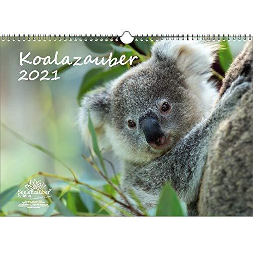 Koalazauber DIN A3 Kalender für 2021 Koalabären, Koala - Geschenkset Inhalt: 1x Kalender, 1x Weihnachts- und 1x Grußkarte (insgesamt 3 Teile)