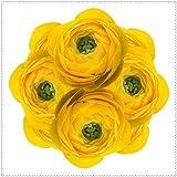 Bulbos de Ranunculus,Hermosas Flores Perennes,Para JardíN,Cuidado Simple,Mundialmente Famoso-11 Bulbos,2