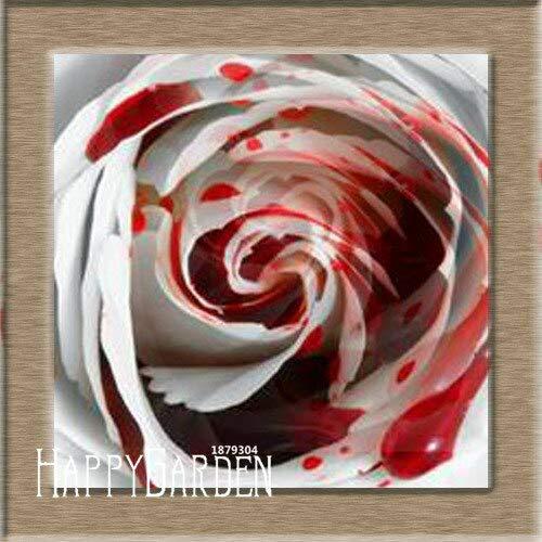 Kalash New 100pcs Rose Blumensamen für Garten Rot Weiß