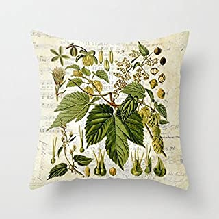 Rdsfhsp Plant Encyclopedia Common Hop Botanical Print On Vintage Almanac Collage Cushion Covers Throw Pillow Covers For Decorating Sofa Car Bedroom Etc Or Gifts Cotton 18x18 In
