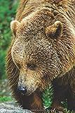 Krafttier Bär - Notizbuch mit Bären Motiv: Tagebuch / Notizbuch mit 120 Seiten