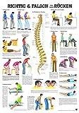 Rüdiger Anatomie Richtig Und Falsch Für Den Rücken