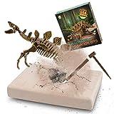 MUSCCCM Kit di scavi per Dinosauri Stegosaurus, Kit di scavo fossili di Scheletro Dino Modello di Dinosauro Realistico Giocattoli educativi Regalo per Bambini Ragazzi Ragazze