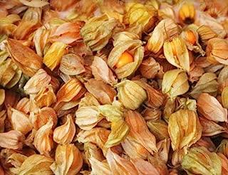physalis pruinosa seeds