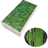 Cratone Deko moos für die Deko zu Ostern Weihnachtsdeko, Modellbau, Dekormoos dunkelgrün Gemischtes Moos konserviertes Kugelmoos,0.5kg (Dunkelgrün)