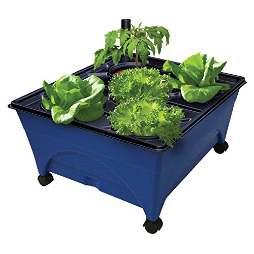 """Emsco Group 2370 Hydropickers Compact 24"""" x 20"""" Footprint – Mobility Provided by Casters Non-Electric Hydroponics Grow Box, Cobalt Blue"""