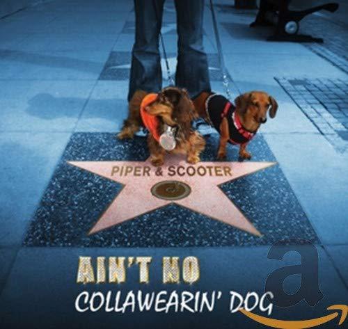 Ain'T No Collawearin' Dog