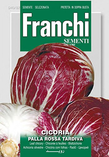 Franchi Sementi DBO40-82 Blattchicorée Rossa Di Chioggia 6 (Salatsamen)