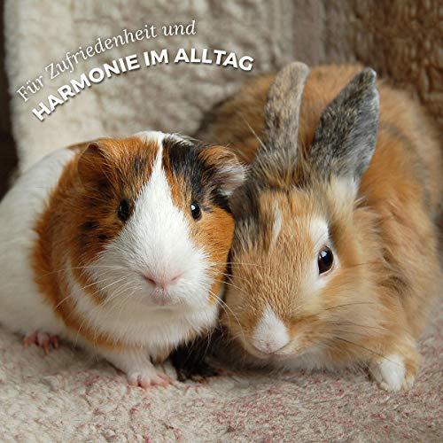 AniForte Natur Nagerfutter 10 Liter u.a. für Hamster, Meerschweinchen, Kaninchen, Chinchilla- Naturprodukt für Nager - 6