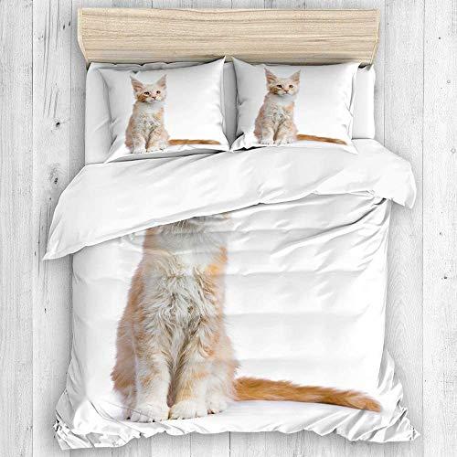 Copripiumino, gatto Maine Coon rosso argento gattino seduto set copripiumino isolato, 1 copripiumino, 2 federe, set copriletto stile casual
