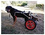 Silla de Ruedas para Perros,Ciclomotor Scooter para Mascota,Adecuado para Perro Discapacitado Paralizada Patas Traseras Rehabilitación Del Caminar Asistido,Ajustable,2 Ruedas,1kg(2.2lb)-50kg(110lbs)