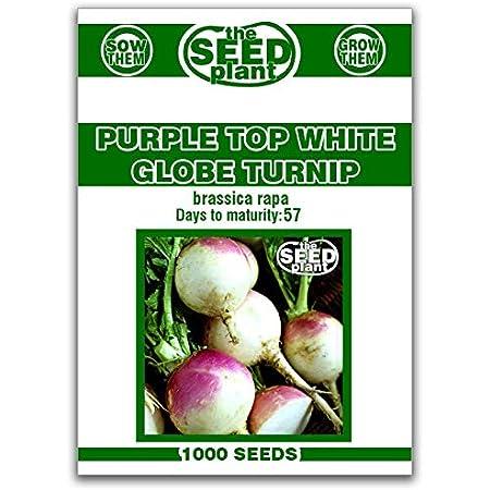 Non Gmo V063 100 Pcs  Purple Top White Globe Turnip Seeds- BRASSICA RAPA