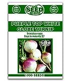 Purple Top White Globe Turnip Seeds - 1000 Seeds Non-GMO