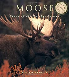 can female moose have antlers
