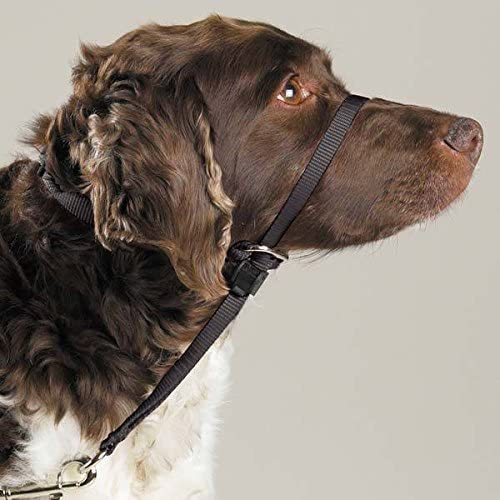 Gentle Leader Free Shipping Cheap Bargain Gift Dog Training Headcollars Teach to Pup At the price of surprise Safely Your