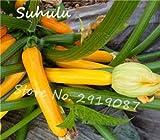 30pcs Multi-Color Zucchini Piante Appena Buon Gusto casa Bonsai Balcone Verdure biologiche DIY in Vaso da Giardino Facile da Coltivare: 1