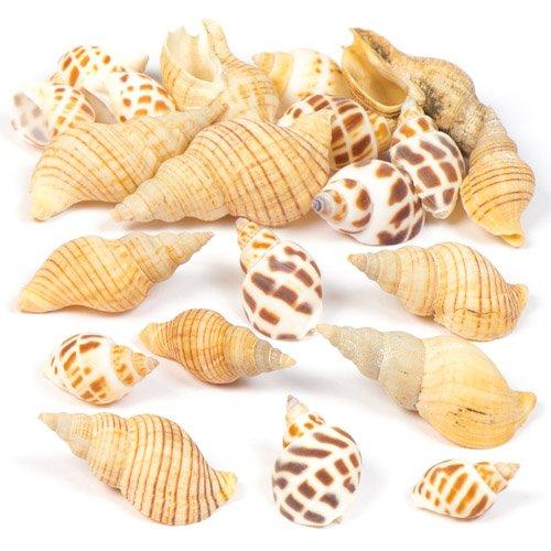 Baker Ross AV167 Set mit Molluskenmuscheln für Kinder und Erwachsene, zum Verzieren von Bastelarbeiten und zum Aufhängen – Natürliche Bastelmaterialien (Beutel mit 200 g), Sortiert