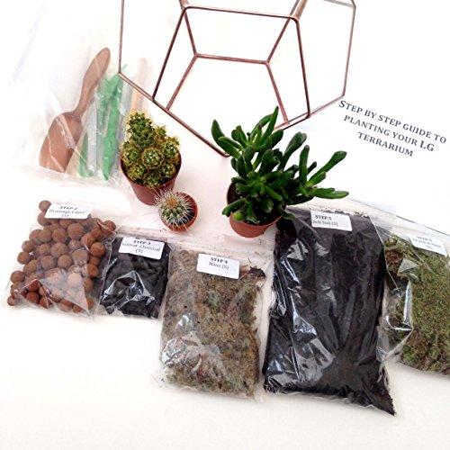 Terrarium en forme de goutte d'eau avec kit de terrarium, plantes/s, outils et guide étape par étape, emballé en Angleterre (grande taille, patine cuivrée)