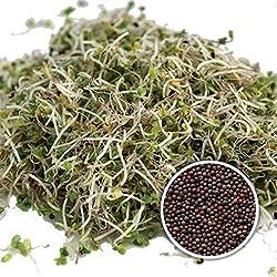 - Brokkolisamen mit hohem Sulforaphan Gehalt dank SorteBrassica rapa sylvestris direkt aus Italien Im Keimglas f/ür Brokkolisprossen oder zum sofortigen Genuss Brokkoli Samen Bio 1000 Gr