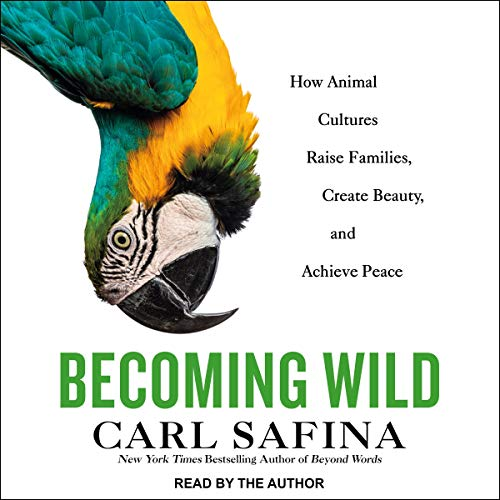 Becoming Wild Audiobook By Carl Safina cover art