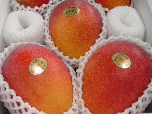 沖縄県産フルーツ アップルマンゴーB品(炭疽あり)1kg