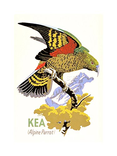 Wee Blue Coo Kea Papegaai Nieuw-Zeeland Vogel Ornithologie Houten Frame Beeld Muur Art Print