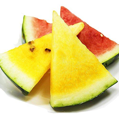 黄色すいか 2玉入り 5キロ〜 サマーオレンジ クリーム系 西瓜
