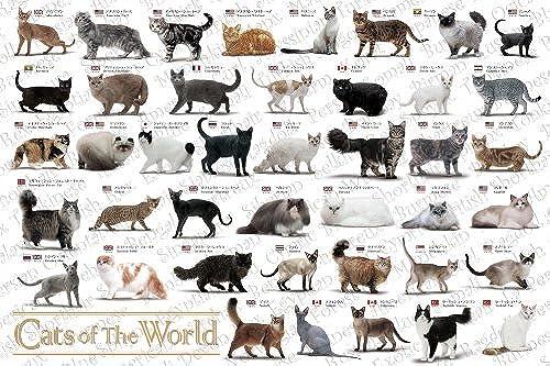 Tienda de moda y compras online. Libro de de de ilustraciones de gato (mascota Collection) master mundo del rompecabezas Aim (japonesas Importaciones)  garantizado
