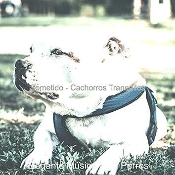 Sometido - Cachorros Tranquilos