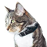 NEW | Cat Tracker | GPS | Light Weight | Unlimited Range | Free and shareable app | UK Support | UBEE LYNX