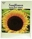Set of 50 Flower Seed Packets! Flower Seeds in Bulk (50, Sunflower)