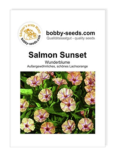 Mirabilis Salmon Sunset von Bobby-Seeds Portion