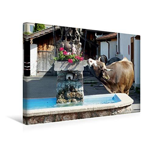 Calvendo Premium Textil-Leinwand 45 cm x 30 cm quer, Schwangauer Brunnenbesucherin | Wandbild, Bild auf Keilrahmen, Fertigbild auf echter Leinwand, Leinwanddruck: Braunvieh im Schwangau Natur Natur