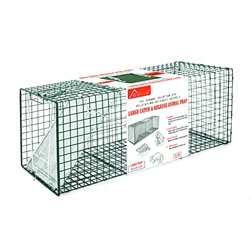 HOMESTEAD 88-205 Live Animal Trap Size 32''x10''x12'' - Humane Catch & Release Large Cage Best for Raccoons, Opossums, Groundhogs, Skunks, Feral Cats - Heavy Duty Steel, 1-Door, Green Color