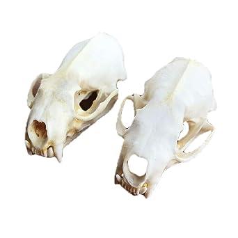 Animal Skull|Jawbone|Miscellaneous Animal Bones|Home Decor|Rustic Decoration|Unique Paperweight|Bones /& Skulls