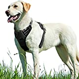 Eagloo Dog Harness No Pull, Walking Pet Harness with 2 Metal Rings and Handle Adjustable Reflective...