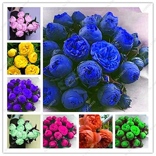 SVI 10 piezas frescas de peonía semillas de flores para plantar color mezclado